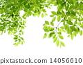 新鮮的綠色 14056610