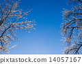 freeze, branches, branch 14057167