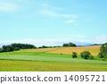 hill, biei, hokkaido 14095721