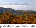 larch, forest, landscape 14098566