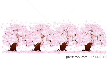 Sakura cherry tree flower 14115242