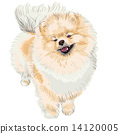 spitz dog smiles 14120005