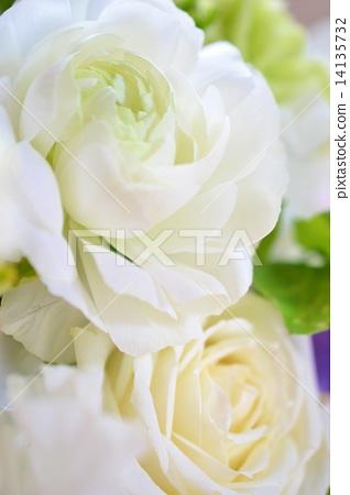 White Ranunculus 14135732