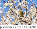 花 小鸟 花卉 14184281