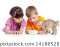 playing, cat, boy 14186528