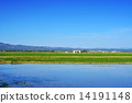 paddy, field, spain 14191148
