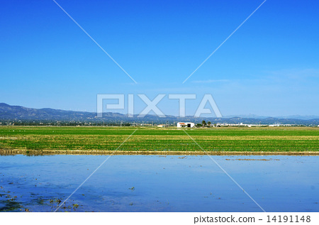 paddy field in Delta del Ebro, in Catalonia, Spain 14191148