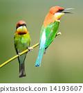 wildlife bee-eater bird 14193607