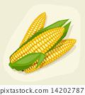 玉米 蔬菜 甜玉米 14202787