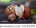snails like a wrestlers 14205905