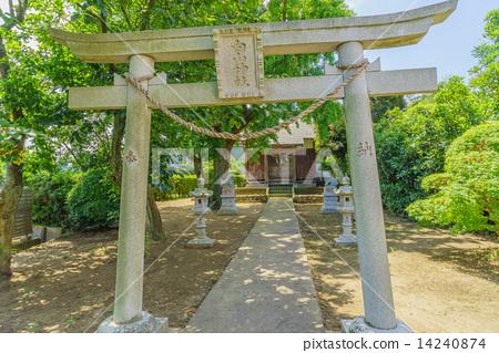 여름의 기사 라즈시의 하쿠산 신사의 도리이와 배전 14240874