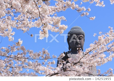 bloom, daibutsu, great statue of buddh 14251955