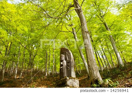 夢幻森林的佛 14256941