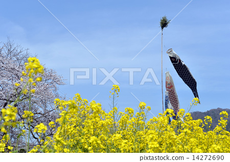 Rapeseed fields and carp streamers 14272690