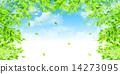 翠綠 鮮綠 葉子 14273095