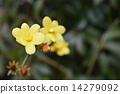 노란 꽃 14279092