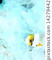 熱帶魚 幼蟲 炒 14279442