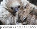 Lid prairie sloth 14281222