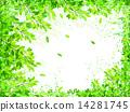 잎 신록 배경 14281745