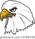 eagle 14289198
