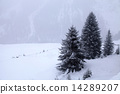 mountain, pine, snowstorm 14289207
