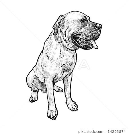 Drawing of mastiff dog on sitting pose 14293874