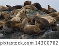 阿拉斯加州 美國 北美 14300782
