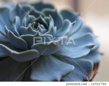 Succulent plants 14302790