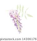 등나무 꽃 14306176