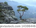 Bonsai tree 14306446