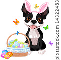 Boston terrier with Easter basket 14322483