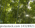 bamboo thicket, green, verdure 14328921