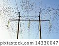 Starlings 14330047