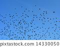 starling 14330050