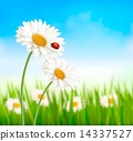 Nature spring daisy flower with ladybug. Vector illustration. 14337527