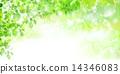 綠葉 輕 橫梁 14346083