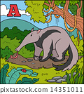 Color alphabet for children (anteater) 14351011
