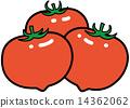 矢量 西紅柿 食品 14362062
