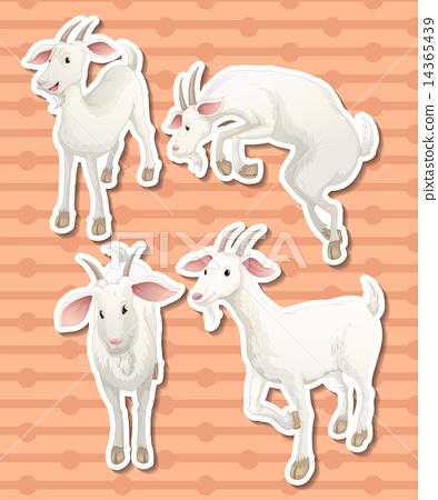 Goat 14365439