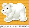 polar, bear, illustration 14368008