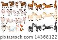 馬兒 牲口 奶牛 14368122