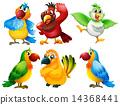 鸟儿 鸟 卡通 14368441