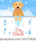Dog wash 14375838
