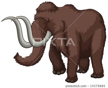 Elephant 14379885