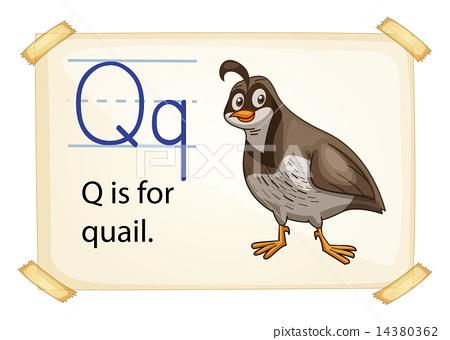 Q Is For Quail A letter Q for quail -...