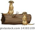 Meerkats 14383109