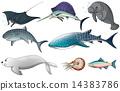 wildlife fish creatures 14383786