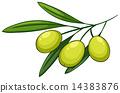 Olive 14383876