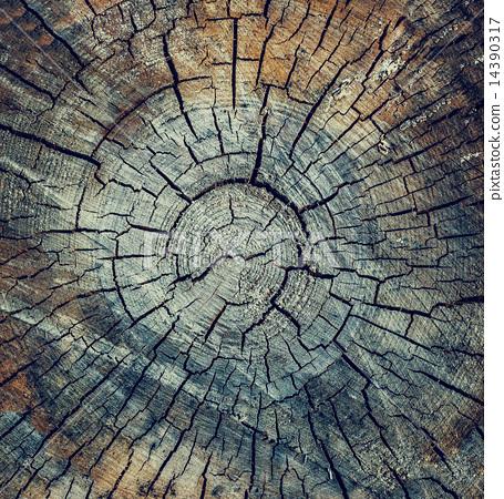 crack wood texture 14390317