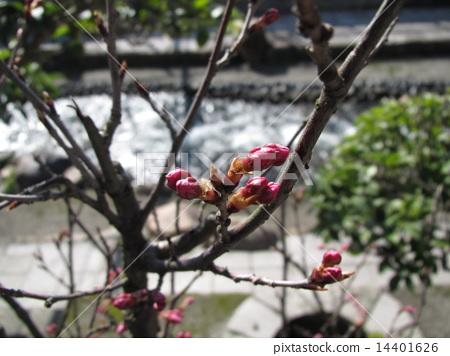 Spring has come 14401626